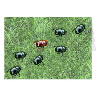 Beetle Design Card