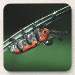 beetle drink coasters