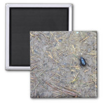 Beetle Magnet