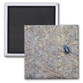 Beetle Refrigerator Magnet