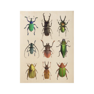 Beetle Mania Beautiful Bugs Wood Poster