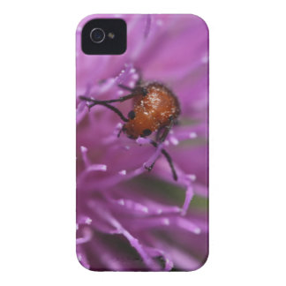 Beetle on a Milk Thistle iPhone 4 Covers
