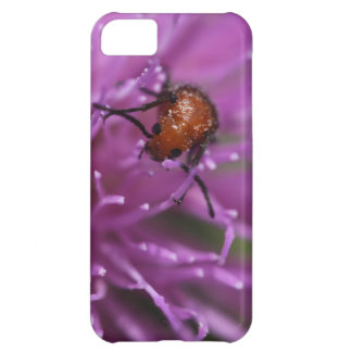 Beetle on a Milk Thistle Case For iPhone 5C