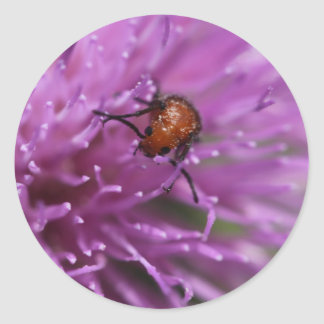 Beetle on a Milk Thistle Sticker