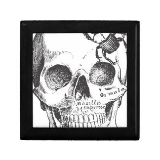 Beetle on a Skull Keepsake Box