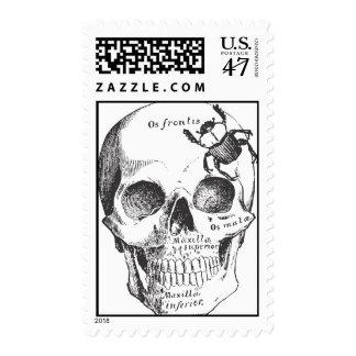 Beetle on a Skull Postage