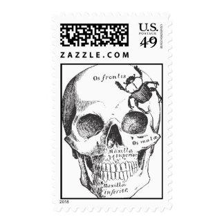 Beetle on a Skull Postage Stamp