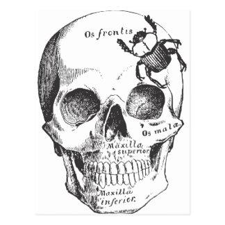 Beetle on a Skull Postcard