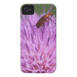 Beetle on Purple Milk Thisle Photograph iPhone 4 Covers