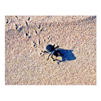 Beetle On The Dunes Post Cards