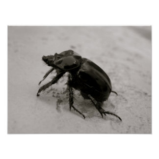 Beetle, Rhinoceros Posters