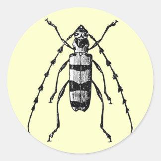 Beetle Round Sticker