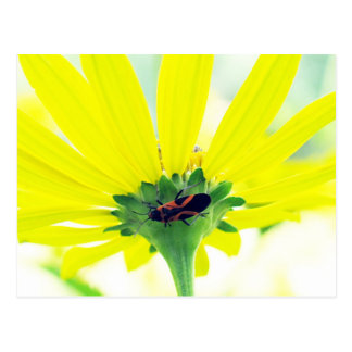 Beetle Under Yellow Flower Postcard