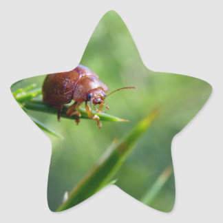Beetle Waves Hello Star Sticker