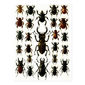 Beetles, beetles, beetles coleoptera pattern postcard