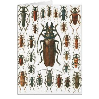 Beetles Beetles, so many beetles pattern picture. Card