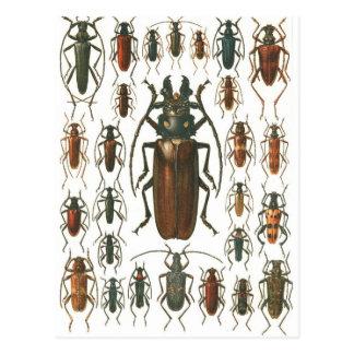 Beetles Beetles, so many beetles pattern picture. Postcard