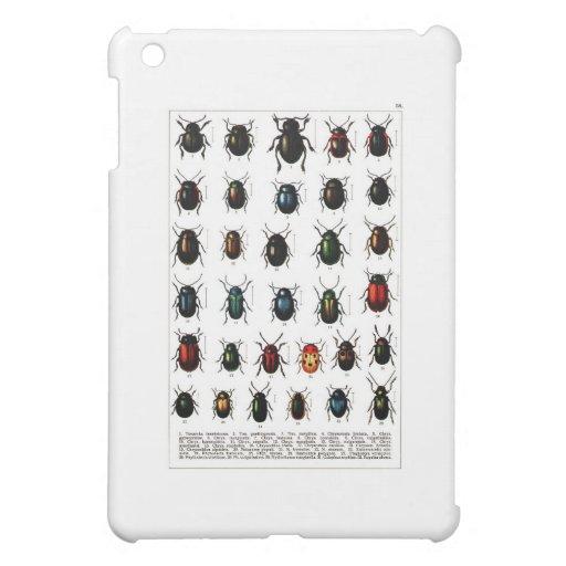 beetles-clip-art-4