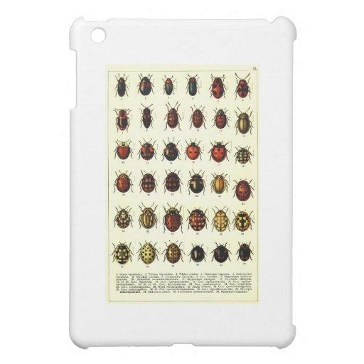 beetles-clip-art-6