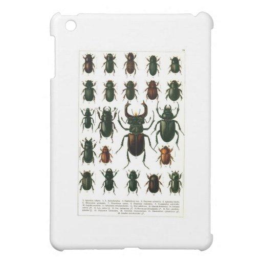 beetles-clip-art-7