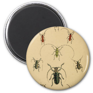 Beetles Magnent 2 Inch Round Magnet