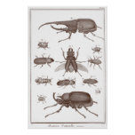 Beetles - Plate LXXV Histoire Naturelle Diderot Poster