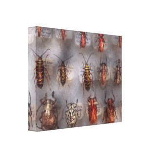 Beetles - The usual suspects Canvas Print
