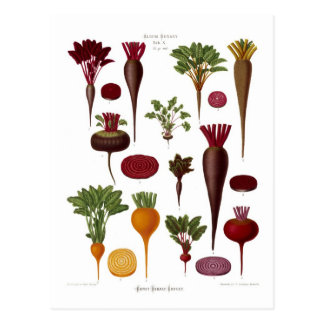 Beets Post Cards