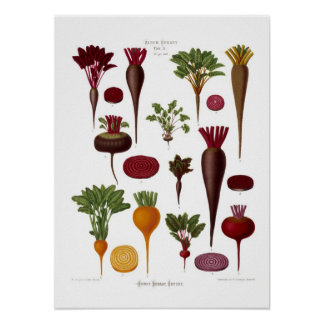 Beets Poster