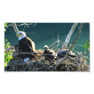 BEF Bald Eagle Family Photo Print
