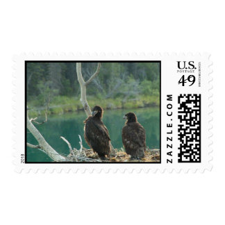 BEG Bald Eagle Grooming Postage Stamp