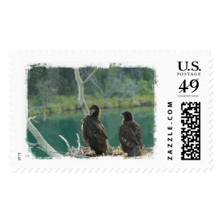BEG Bald Eagle Grooming Stamp