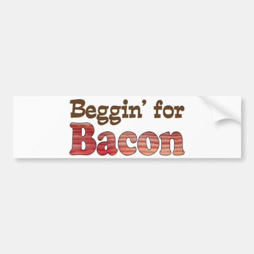 Beggin' for Bacon Bumper Stickers