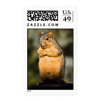 Begging Fox Squirrel Postage