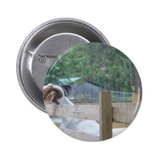 begging goat pinback button