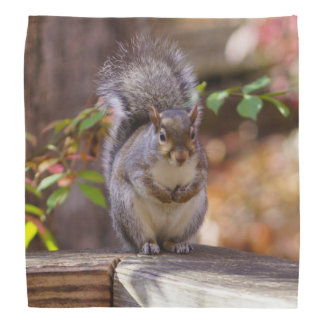 Begging Squirrel Bandana