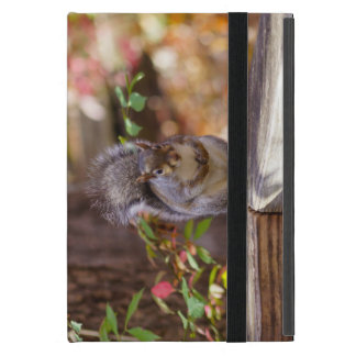 Begging Squirrel Case For iPad Mini