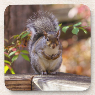 Begging Squirrel Coaster