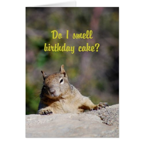 Begging Squirrel Happy Birthday Card