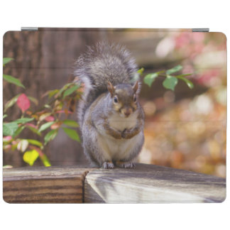 Begging Squirrel iPad Smart Cover
