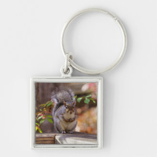 Begging Squirrel Keychain