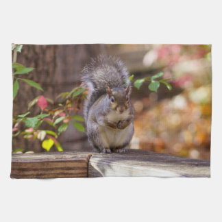 Begging Squirrel Kitchen Towel