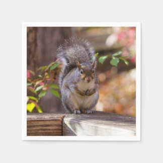 Begging Squirrel Paper Napkin