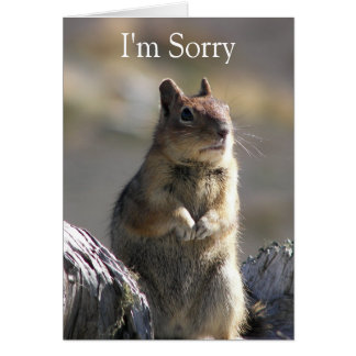Begging Squirrel Photo Apology Greeting Card