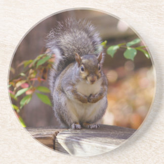 Begging Squirrel Sandstone Coaster