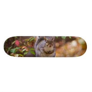 Begging Squirrel Skateboard Deck