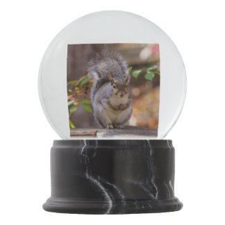 Begging Squirrel Snow Globe