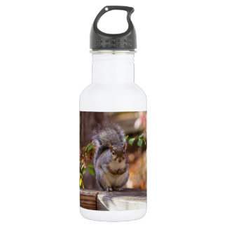 Begging Squirrel Water Bottle