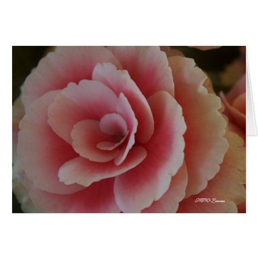 Begonia Beauty Cards