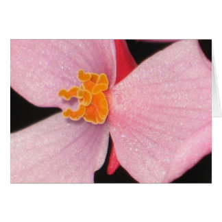 Begonia Tarjetas